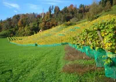 Weingut-Tellen-Herbst